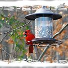 Male Cardinal by Susan S. Kline