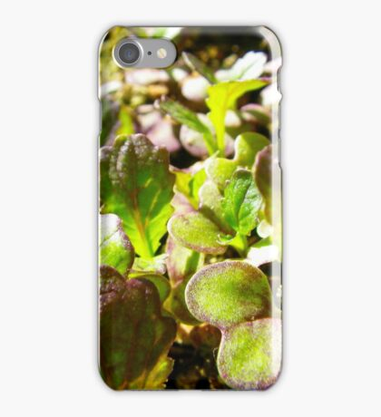 Spicy Salad iPhone Case/Skin