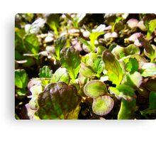 Spicy Salad Canvas Print