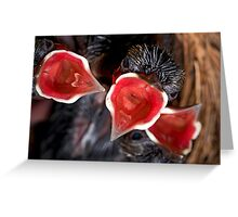 Hatched & Hungry Greeting Card