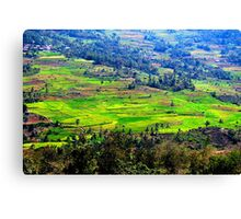 rice field view Canvas Print