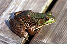 Leopard Frog by Johnny Furlotte