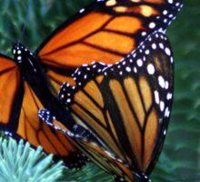 Monarch's Breeding Sticker