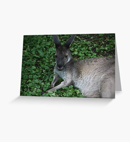 Boomer Buddy Greeting Card