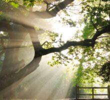 Morning Sun rays At Hampden Park, Eastbourne. Sticker