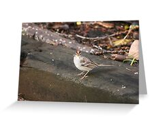 Rufous Crowned Sparrow Greeting Card