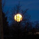 Moon spy by MarianBendeth
