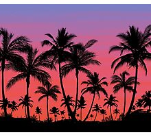 Tropical Palm Tree Sunset Photographic Print