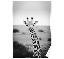 Long-Lashes Giraffe Poster