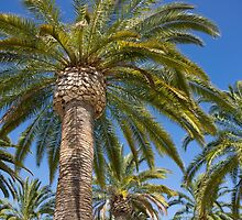 The palms. by Anne Scantlebury