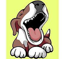 Laughing Bull Terrier White & Brown Photographic Print