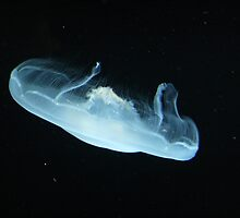 Moon Jellyfish by Alyce Taylor