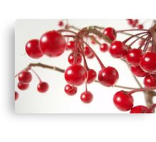 Ardisia Crenata Evergreen Shrub With Red Berries Canvas Print