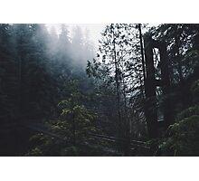 Forest Bridge Photographic Print