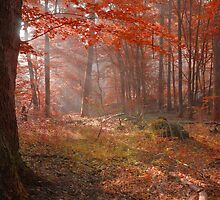 Autumn dawn in an old forest landscape by juras