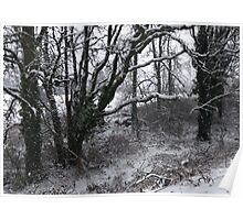 Into the Snowy Woods Poster