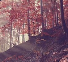 Vintage sunrise on the  forest slope  by juras