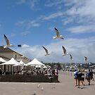 Bondi Beach by observer11