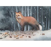 Red Fox in a Snowstorm Photographic Print