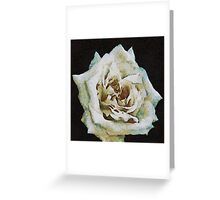 A Romantic White Wedding Rose Greeting Card