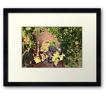 vineyard with grape and wine  Framed Print