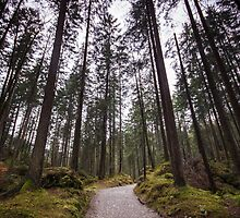 Bavarian Alps Path - 2/4 by Luka Skracic