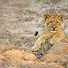 lion cub by BlaizerB