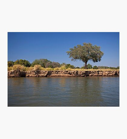 Zim tree Photographic Print