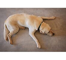 Tired Pooch Photographic Print
