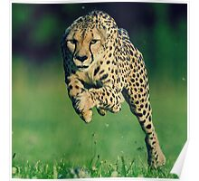 Cheetah Motivation Poster