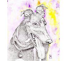 Black greyhound Photographic Print