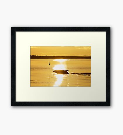 Early dolphin gets the fish Framed Print