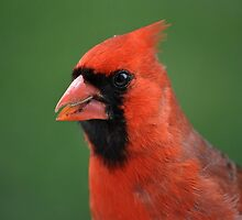 Happy Cardinal by Gretchen Dunham