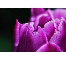 Purple Velvet Photographic Print
