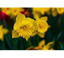 Spring Nectar Photographic Print