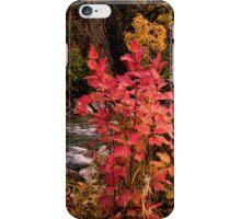 Autumn Jewels iPhone Case/Skin