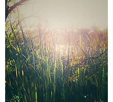 Water grass Photographic Print
