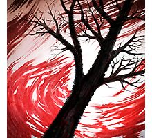 Dark Tree Red Clouds - V01 Photographic Print