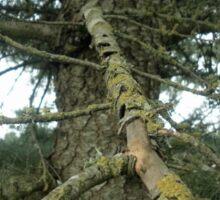 Lichen and Pine Sticker