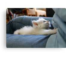kitten Canvas Print