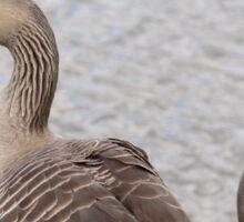 Greylag Geese Sticker