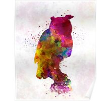 Owl 01 in watercolor Poster