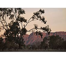 Kangaroos at the Mountain Side by Lorraine McCarthy Photographic Print