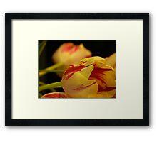 floral exhibition Framed Print