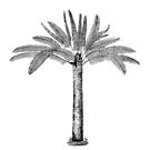 Palm Tree by artsandsoul