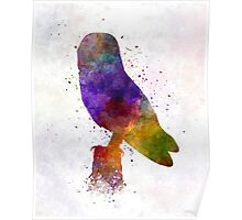 Barn Owl 01 in watercolor Poster