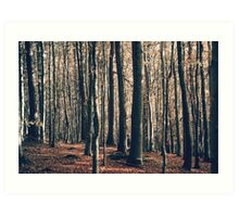 Devils Glen Forest Art Print