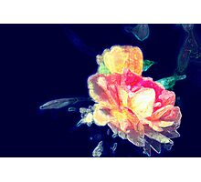 Roses with a splash of colour Photographic Print
