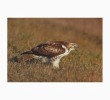 Red-tailed Hawk - juvenile One Piece - Short Sleeve
