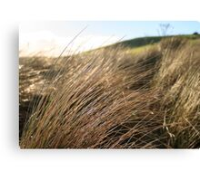 Beach Grass Canvas Print
